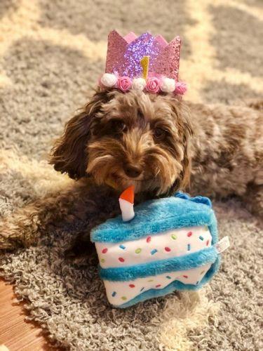 Bailey's Profile Image